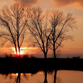 Trees trio.. by Željko Salai - Nature Up Close Trees & Bushes