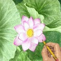 Draw Flowers APK for iPhone