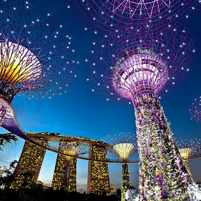 Garden by the bay by Hendrik Cuaca - City,  Street & Park  Night