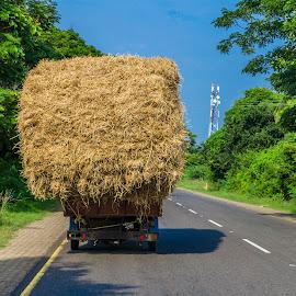 by Ivon Murugesan - Transportation Other ( field, rice, paddy field, other, paddy, transportation, photography )