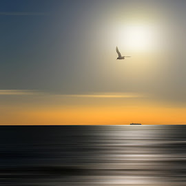 In to the Sun by Luigi Alloni - Landscapes Sunsets & Sunrises ( seagull sea sky  sunset backlight ship )
