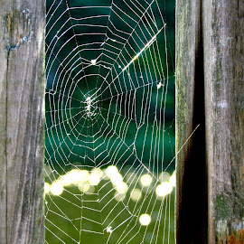 by Shelley Wilson - Nature Up Close Webs