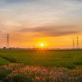 sunset by expressway by Haikal Yahaya - Landscapes Sunsets & Sunrises ( paddy field, sunset, penang, malaysia, landscape, panorama )
