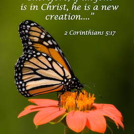 New Creation by Steven Faucette - Typography Quotes & Sentences ( butterfly, christianity, monarch, scripture, bible )