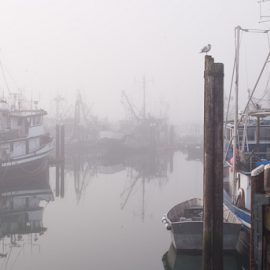 at rest by Joel DeWaard - Transportation Boats ( calm, harbor, peaceful, boats, tranquil, gull, foggy, seagull, fog, fishing boats, serene, serenity, peace, tranquility, marina, fishing )