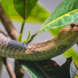 New heights by Sujit Shanshanwal - Animals Reptiles (  )
