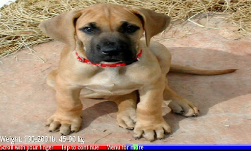 Puppies and Dogs 1 FREE