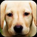 Labrador Wallpapers icon