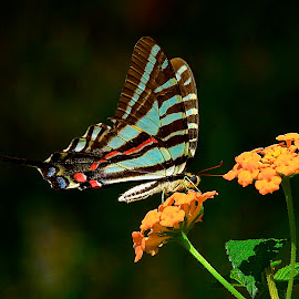 Simple Pleasures II by Roy Walter - Animals Insects & Spiders ( animals, bnugs, nature, butterflies, insects )