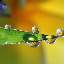 :: on grass :: by Dedy Haryanto - Nature Up Close Natural Waterdrops (  )