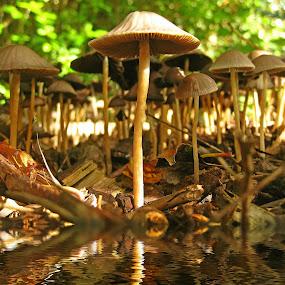 by Ad Spruijt - Nature Up Close Mushrooms & Fungi ( mushroom, nature, natural,  )