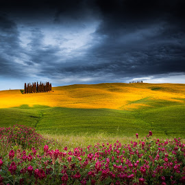 The Miracle by Pete Bondurant - Landscapes Prairies, Meadows & Fields