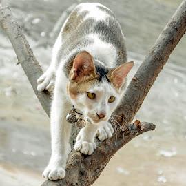 gullu in tree by Tareq Touhid - Animals - Cats Portraits