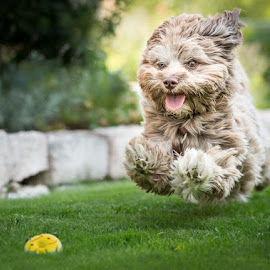 Jump for your Love by Stefan Tiesing - Animals - Dogs Running