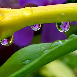 Drops  by Anupam De - Nature Up Close Water