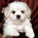 可愛的小狗A2的拼圖 icon