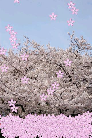 Sakura Petals Livewallpaper