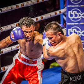 WBA BOXING CHAMPIONSHIP by Irwan Budiarto - Sports & Fitness Boxing ( champion, wba, world boxing, boxing,  )