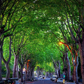 by Rose Cavalier - City,  Street & Park  Neighborhoods