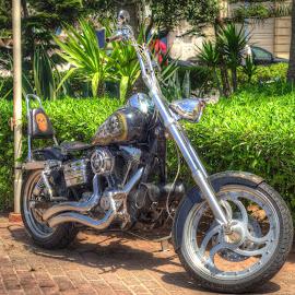 Bike by Tariq Ouhti - Transportation Motorcycles ( harley davidson, essential, bike, hdr, essaouira, d90, 50mm, essawia, nikon, morocco )