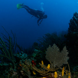Reef with Diver by David Gilchrist - Landscapes Underwater ( reef, aquatic, roatan, underwater, landscape )