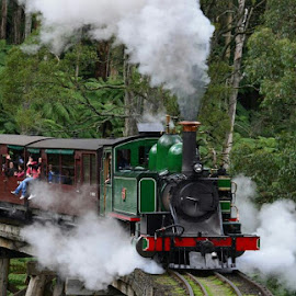 Puffing Billy by Rodney Denholm - Transportation Trains (  )