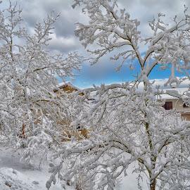 by Kristijan Pernar - Landscapes Weather (  )