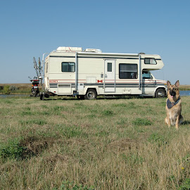 Pear in front The Honey by Tyler McLeod - Animals - Dogs Portraits ( full time rv, blue sky, lake, south dakota, rv, dog, german shepherd, home is where you park it )