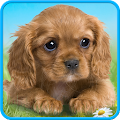 Talking puppy for Lollipop - Android 5.0