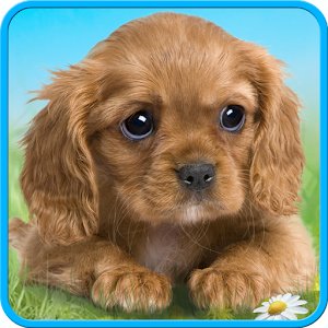 Talking puppy For PC (Windows & MAC)