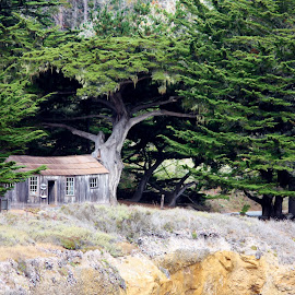 Among the Cypress by Kathleen Whalen - Buildings & Architecture Public & Historical