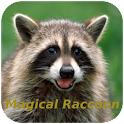 Magical Raccoon icon