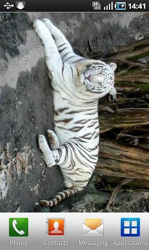 TigerWallpaper