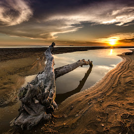 The driftwood by Bouras Panagiotis - Landscapes Sunsets & Sunrises ( calm, clouds, sand, reflection, wood, colors, diftwood, waves, greece, sea, seascape, sun, sky, sunset, light )