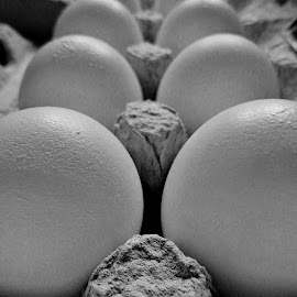 Eggs by Erin Czech - Food & Drink Cooking & Baking ( egg carton, eggs, black and white, food, white,  )
