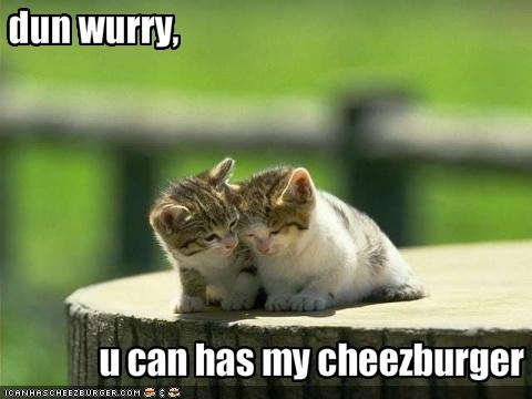 funny-pictures-kitten-gives-his-friend-a-cheeseburger.jpg