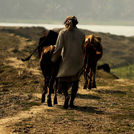 IN SEARCH OF by Tuhin Biswas - People Fine Art ( cow, road,  )