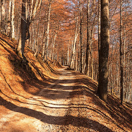 shades of autumn by Mihai Orboiu - Landscapes Forests ( mountain, autumn, trees, rusty, leaves )