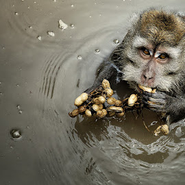 Give Me Food by Zainal CZmania - Animals Other Mammals ( monkey )