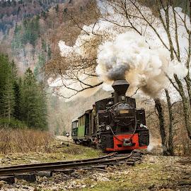 Mocanita - Viseu, Maramures - Romania by Mirela Savu - Transportation Trains ( , land, device, transportation )