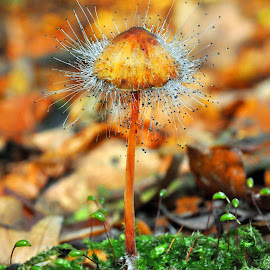 Mold Attack by Marco Bertamé - Nature Up Close Mushrooms & Fungi ( mushroom, mycena, mold, autumn, fall, forest, hairry, leaves, hat,  )