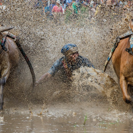 Take Off (pacu jawi) by Kampia Bareh - News & Events Sports ( minangkabau, indonesia tourism, indonesia, pacu jawi, west sumatera )