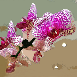 Chez Phillip's Orchid by Martha van der Westhuizen - Instagram & Mobile iPhone ( spotted, processed, orchid, blooms, pink )