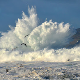 by Barbara Walsh - Landscapes Waterscapes ( clogher, water, wild, ireland, waves, weather, sea, kerry, storm, birds,  )