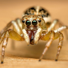 Spider looking for prey by Dave Lerio - Animals Insects & Spiders