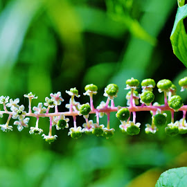 by Lisa Montcalm - Nature Up Close Other plants