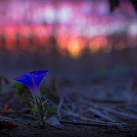 Blues and Pinks by Shiphrah Johnson - Nature Up Close Other plants