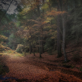 Autumn in Hocking Hills by Denny Betts - Landscapes Forests ( stream, park, nature, brook, autumn, fall, trees, forest, landscape, leaves, woods, fall color,  )