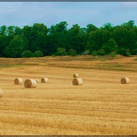 by Connie Payne - Landscapes Prairies, Meadows & Fields