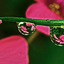 Drops with wood sorrel reflected by David Winchester - Nature Up Close Other Natural Objects